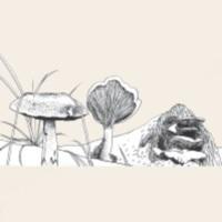 vignette_32-champignons.jpg